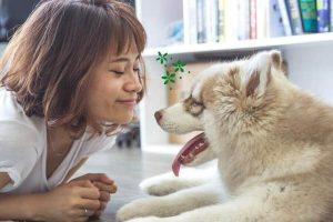 Mejores Colonias Para Perros