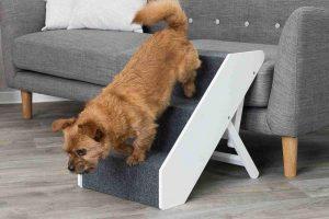 Mejores Escaleras Para Perros