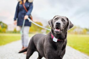 Mejores GPS para perros