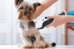Mejores máquinas de cortar pelo para perro