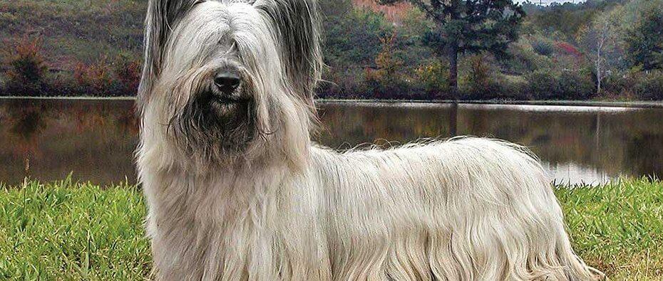 Bienvenidos a Código Canino, el mejor sitio para la diversión y cuidado de tu perro