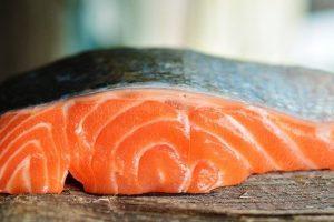 Piensos de salmón para perros